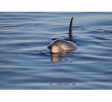 Dolphin dinner time Photographic Print
