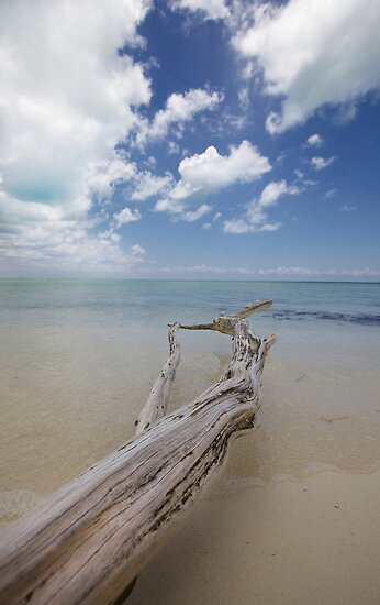Cozumel, Mexico - Deadwood by Jonathan Bartlett
