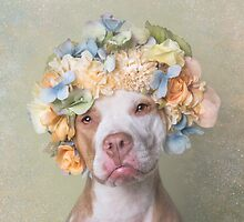 Flower Power, Lola by Sophie Gamand