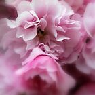 Lovely Spring Blossom by Lozzar Flowers & Art