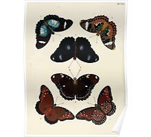 Exotic butterflies of the three parts of the world Pieter Cramer and Caspar Stoll 1782 V3 0054 Poster