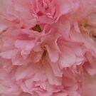 Softly softly. by Lozzar Flowers & Art