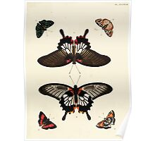 Exotic butterflies of the three parts of the world Pieter Cramer and Caspar Stoll 1782 V2 0309 Poster