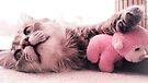 My squishy. by schizomania