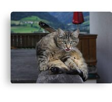 Grooming Time Canvas Print