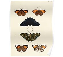 Exotic butterflies of the three parts of the world Pieter Cramer and Caspar Stoll 1782 V2 0237 Poster