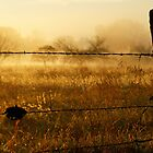 Sunrise fence in Wakarusa by agenttomcat