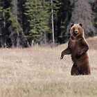 Grizzly Stand by Marty Samis