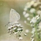 Textured Butterfly by garts