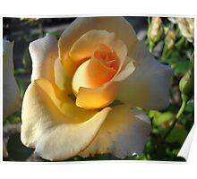 Autumn Rose. Poster