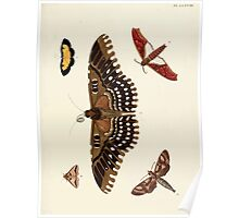 Exotic butterflies of the three parts of the world Pieter Cramer and Caspar Stoll 1782 V1 0375 Poster