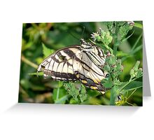 A male Eastern Tiger Swallowtail. Greeting Card