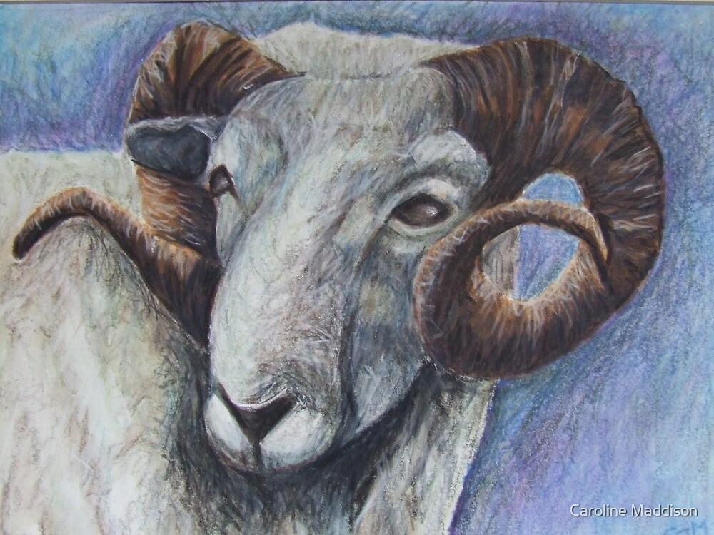Study of Rams Head by Caroline Maddison