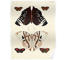 Exotic butterflies of the three parts of the world Pieter Cramer and Caspar Stoll 1782 V2 0261 Poster