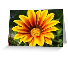 A gorgeous Gazania. Greeting Card