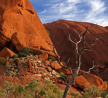 Dead Tree, Uluru by nigelphoto