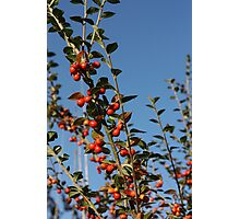Autumn Berries Photographic Print