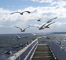 Flight of seagulls, Grantville beach, Victoria by Reneefroggy