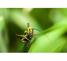 Cricket on grass Photographic Print