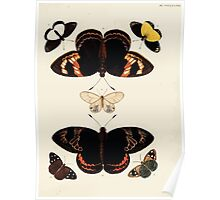 Exotic butterflies of the three parts of the world Pieter Cramer and Caspar Stoll 1782 V4 0405 Poster