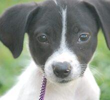 puppy by scott staley