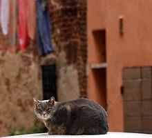 On a Car-Tuscany by Deborah Downes