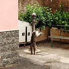 Italian Street Cats by Deborah Downes