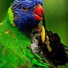 Rainbow Lorikeet III by Damienne Bingham