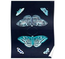 Exotic butterflies of the three parts of the world Pieter Cramer and Caspar Stoll 1782 V2 0072 Inverted Poster