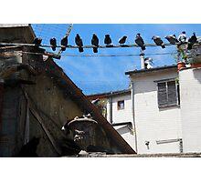 Bird Watch-Arezzo, Italy Photographic Print