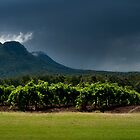 An Australian Vineyard by MonicaMulder