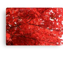Japanese Maple 03 (Fall 2007) Canvas Print