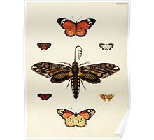 Exotic butterflies of the three parts of the world Pieter Cramer and Caspar Stoll 1782 V2 0082 Poster