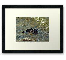 Scramble / Wild World Framed Print
