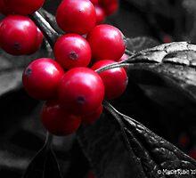 Selective Berries by Marcia Rubin