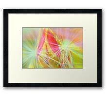 A Rose Bud and Dandilion Fluff Framed Print