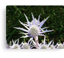 Spikey Plant! Canvas Print