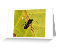Ant with aphid Greeting Card