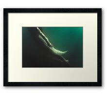 Underwater Beauty Framed Print