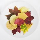 autumn menu by Catherine Hadler
