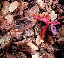 The Odd One Out, Fallen Leaves by pixel8it