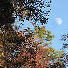Fall Colors With Moon by Misty Lackey