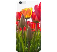 Vibrant orange tulips iPhone Case/Skin