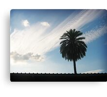 Lonely Palm Canvas Print