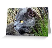Cat Eyes Greeting Card