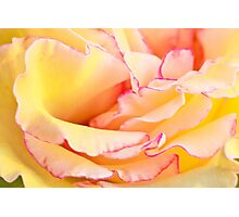 Yellow and Pink Rose Photographic Print