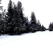 Snowy Trail by CaitlynCasper