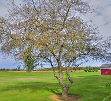 Large Tree by Kathleen Struckle