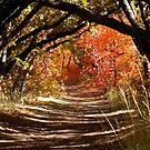Deep in the Oak Arch by Brian Bo Mei