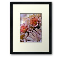 Peach Mums Framed Print